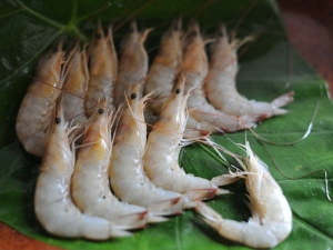 Advantages And Disadvantages Prawn