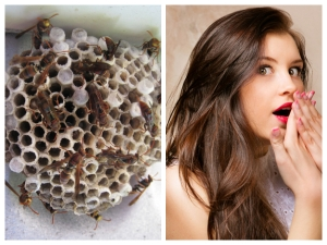 Wasp Nests For Vaginal Rejuvenation All You Need To Know