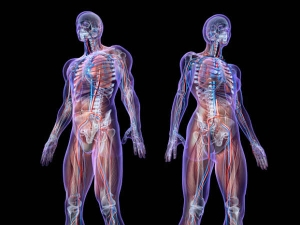 How Your Emotions Affect Your Body Organs