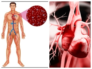 Natural Ways To Keep Your Arteries Healthy