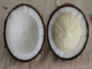 Amazing Health Benefits Of Coconut Flower