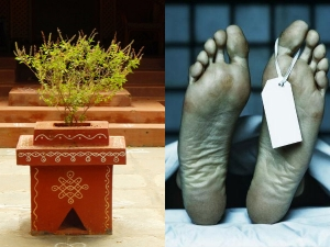 Doing These Things To Sacred Tulsi Leaves Will Lead To Death