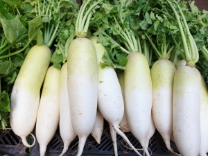 Eating Radish During Pregnancy