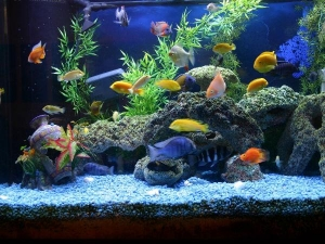 Health Benefits Of Aquarium Therapy