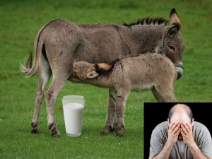 Beauty Benefits Of Donkey Milk For Skin And Hair
