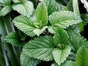 Reasons To Add Peppermint To Your Diet