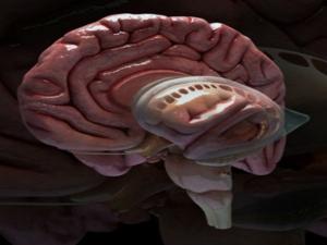 Foods To Reverse Brain Damage