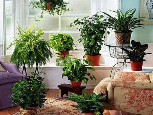House Plants That Improve Your Health