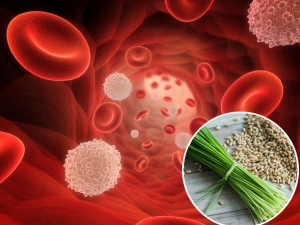 Wheat Grass Increase Your Red Blood Cells