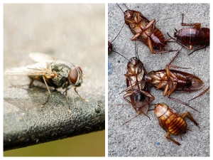 Home Remedies To Get Rid Flies From Your Kitchen