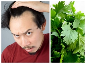 How To Use Coriander Leaves For Hair Loss And Re Growth
