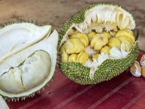 Jackfruit Vs Durian 7 Ways They Are Not The Same