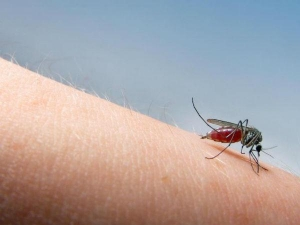 Ineresting Facts About Mosquito