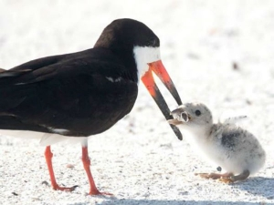 This Pic Of Bird Feeding Cigarette Butts To Its Baby Will Break Your Heart