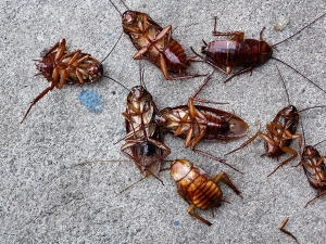 Do You Know That Cockroaches Are Now Almost Impossible To Kills