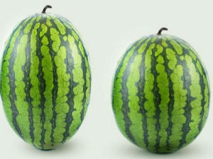 How To Grow Seedless Watermelon