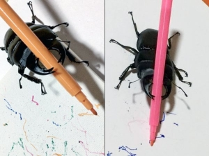 Meet Spike The Stag Beetle Who Paints
