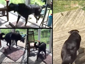 A Kind Dog Saves A Trapped Bird S Life Viral Video