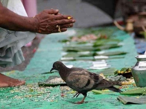 Mahalaya Amavasya 2019 Feeding Crows On Pitru Paksha