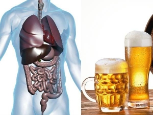 What Happens In Your Body 24 Hours After Drinking A Beer