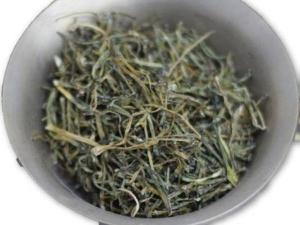 Himalayan Faran A Special Herb With Umpteen Medicinal Benefits
