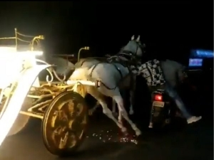 Watch Men On Bike Chasing Out Of Control Horse Carriage In Pune