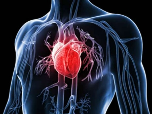 Best Yoga For Heart Problems 5 Effective Mudras For Healthy Heart Rate