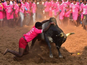 Unknown History Of Jallikattu