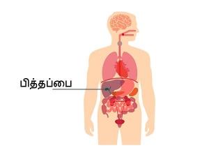Gallbladder Disease Are Bad Eating Habits To Be Blamed