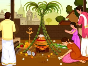 Pongal Festival Different States Celebrates In Different Ways