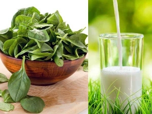 Fact Or Myth Can You Eat Spinach And Milk Together