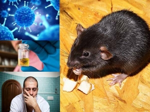 Hantavirus Signs Symptoms Causes Diagnosis Prevention
