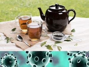 Ceylon Tea An Immunity Booster For Covid