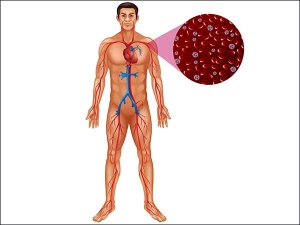 How Dangerous Is Iron Deficiency Anaemia