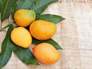 Mango Can Help Protect Against Radiation Damage
