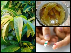 A Mango Leaves Concoction Can Cure Diabetes
