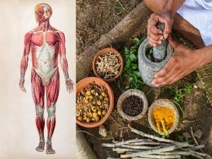 Health Benefits Of Dashamoola
