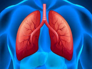 Vitamin C Fruits That Promote Lung Health