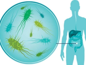 What Are Probiotic Foods And How They Help Lose Weight And Belly Fat