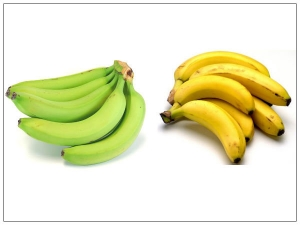 Which Type Of Banana Is Good For Weight Loss