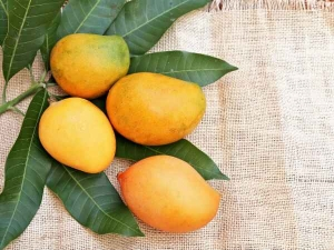 Does Eating Mango Make You Gain Weight