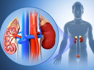 National Kidney Month Know How Type 2 Diabetes Can Affect Your Kidneys