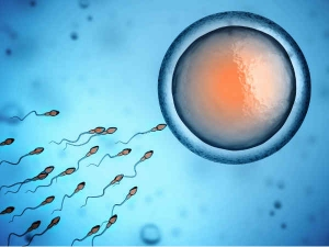Healthy Facts About Semen