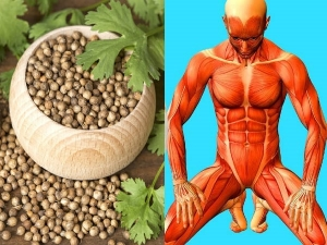 Why One Must Have Drink Dhania Coriander Water Daily