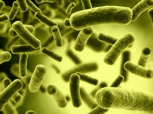 Symptoms And Treatment Of The New Fungal Infection Aspergillosis