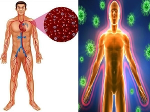 Iron Rich Foods That Will Boost Your Immune System In Tamil
