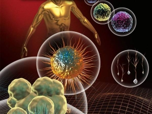 Know Myths And Facts Related To Stem Cell Therapy
