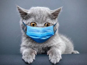 Cats More At Risk Of Covid 19 Infection Than Dogs Study