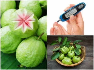 Guavas For Diabetes Reasons Why Guava Fruits And Leaves Good To Manage Blood Sugar In Tamil