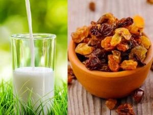 Amazing Health Benefits Of Having Raisins With Milk In Tamil